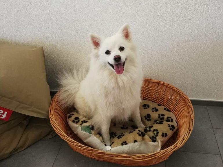 Dog Content Werbung Kommunikationsagentur Social Media Online Web Print Klicks Blog