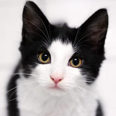 Cat Content Werbung Kommunikationsagentur Social Media Online Web Print Klicks Blog